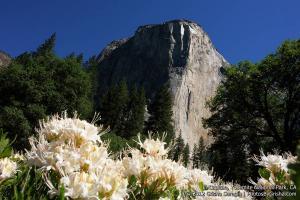Yosemite-El-Capitan-4