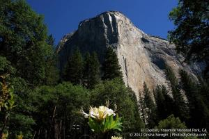 Yosemite-El-Capitan-6